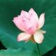 Подарок  женщинам к празднику 8 марта! Начните день с практики йоги и он сложится удачно!!!